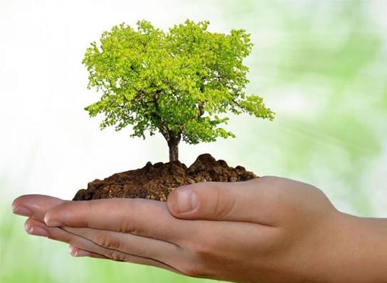 05 de Junho — Dia Mundial do Meio Ambiente